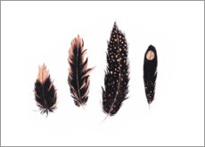 Canvas print  Ink and rose gold feathers - Ella Tjader