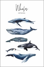 Canvas print  Whales - Art Couture