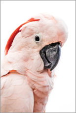 Wood print  Pink Cockatoo - Art Couture