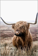 Wood print  Brown Highland Cattle - Art Couture