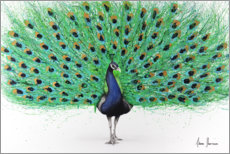 Canvas print  Proud Peacock - Ashvin Harrison