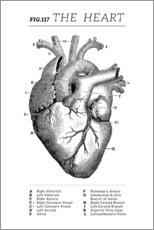 Premium poster  Vintage heart chart - Wunderkammer Collection