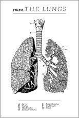 Wood print  Fig.116 Lungs (Vintage Chart) - Wunderkammer Collection