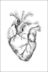 Canvas print  Anatomical Heart - RNDMS