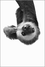 Canvas print  Hang out - sloth - Sisi And Seb