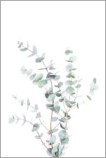 Canvas print  Eucalyptus II - Sisi And Seb