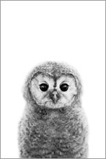 Premium poster  Young owl - Art Couture