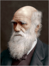 Wall sticker  Charles Darwin
