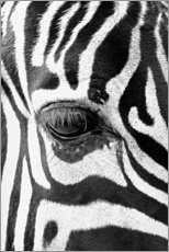 Canvas print  Eye of the zebra - Art Couture
