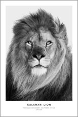 Gallery print  Kalahari Lion - Art Couture