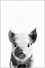 Foam board print  Young piglet - Art Couture