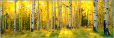 Gallery print  Sunbeams in the birch forest