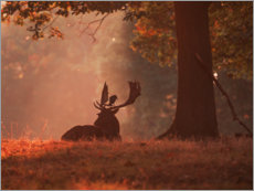 Wall sticker  A Fallow deer stag rests in an autumn forest. - Alex Saberi