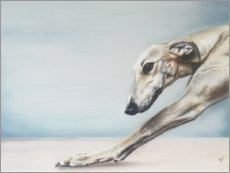 Acrylic print  Whippet - Victoria Coleman