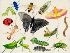 Acrylic print  The world of insects - Alicia Ludwig