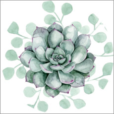 Premium poster  Succulent collection B - Grace Popp