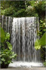 Gallery print  Waterfall in the orchid garden - Cindy Miller Hopkins