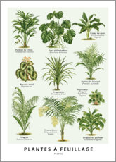 Acrylic print  Foliage plants (french) - Wunderkammer Collection
