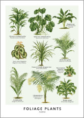 Canvas print  Foliage Plants - Wunderkammer Collection