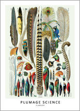 Acrylic print  Feathers - Wunderkammer Collection