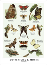 Aluminium print  Butterflies and moths - Wunderkammer Collection