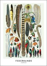 Canvas print  Feathers (German) - Wunderkammer Collection
