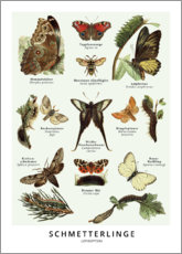 Canvas print  Butterflies (German) - Wunderkammer Collection