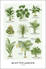 Premium poster  Foliage plants (German) - Wunderkammer Collection