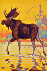 Canvas print  Moose in the moor - Travel Collection