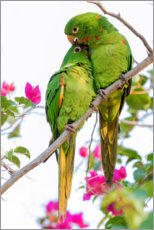 Foam board print  Parakeets while cuddling - Ken Archer