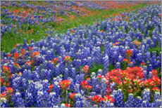 Premium poster  Meadow with wildflowers - Gayle Harper