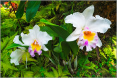 Acrylic print  Orchids in the botanical garden - Russ Bishop