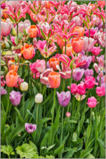 Canvas print  Tulips II - Holice Looney