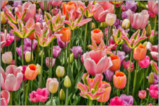 Canvas print  Tulips IV - Holice Looney