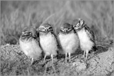 Foam board print  Four owl chicks - Elizabeth Boehm