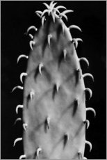 Canvas print  Cactus - Aenne Biermann