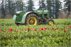 Wood print  Tractor on a tulip field