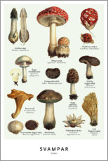 Aluminium print  Mushrooms (Swedish) - Wunderkammer Collection