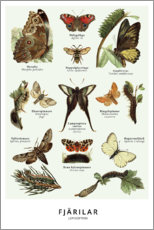 Acrylic print  Butterflies (Swedish) - Wunderkammer Collection