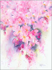 Canvas print  Cherry blossoms - Rachel McNaughton