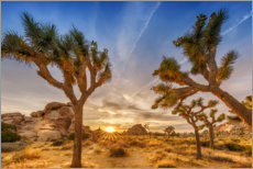 Premium poster Sunset in the Joshua Tree National Park