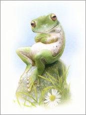 Canvas print  Frog, waiting - Simon Mendez