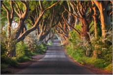 Canvas print  Tree avenue in the first morning light - The Wandering Soul