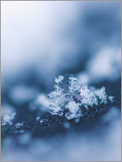 Acrylic print  The first snow - Lena Steiner