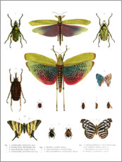 Premium poster  Color splendor of insects I - Wunderkammer Collection