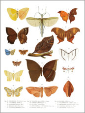 Premium poster  Colourfulness of insects III - Wunderkammer Collection