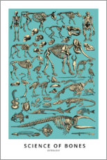 Premium poster  Osteology - Wunderkammer Collection