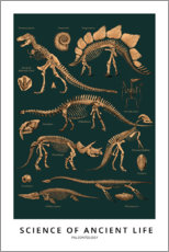 Canvas print  Paleontology - Wunderkammer Collection