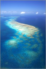 Gallery print  Great Barrier Reef Marine Park - David Wall