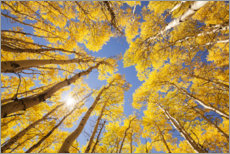 Wall sticker  Autumn-colored aspen forests of Colorado - The Wandering Soul